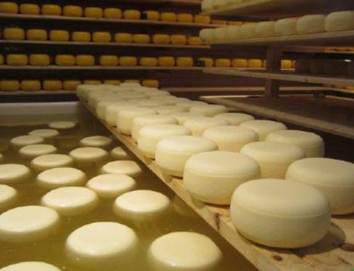 Предприятие по производству твердых сортов сыра